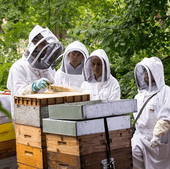 atelier initiation découverte ruche